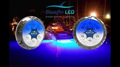 bluefin lld